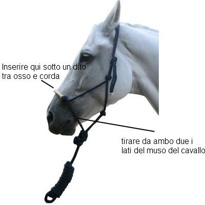 Come Costruire Un Cavallo.Capezza Di Corda O Capezza Classica Etologia Del Cavallo