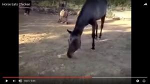 cavallo carnivoro